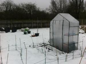 Christmas 2011 on plot 2a