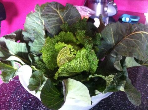 cabbage_crop