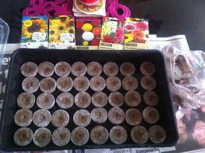 Sowing sunflowers