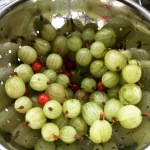 gooseberries and redcurrant