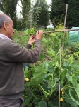 Pops and squash scaffolding