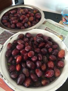 Plot plums