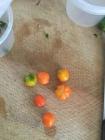 pumpkin chilies