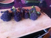 purpleSbrocolli
