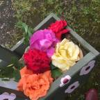 the floral trug and roses