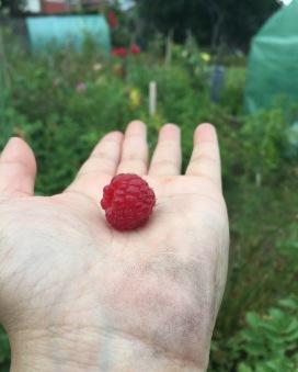 polka raspberry