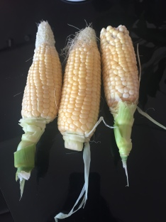 Incredible F1 sweetcorn