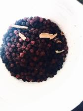 blackberries in the bucket